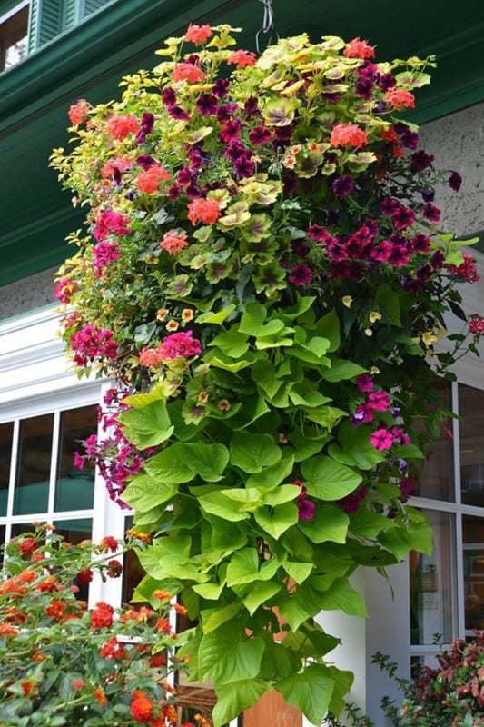 Beautiful Hanging Basket Ideas A Piece of Rainbow
