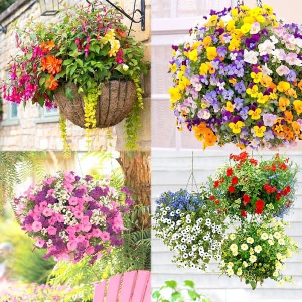 How To Plant Flower Hanging Baskets Best Plants For Hanging Basket Apieceofrainbowblog 9