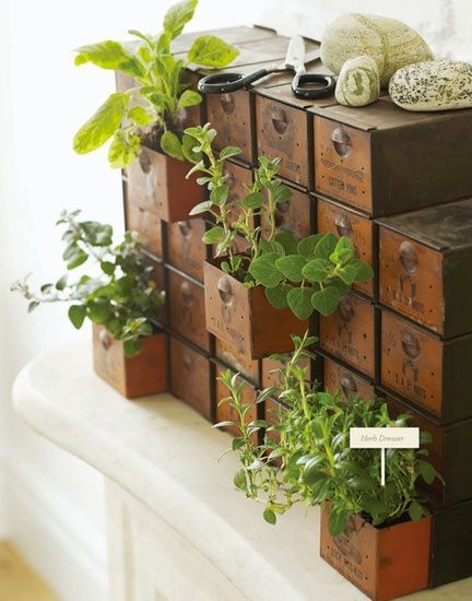 Small Rustic Drawers With Plants Popping Out