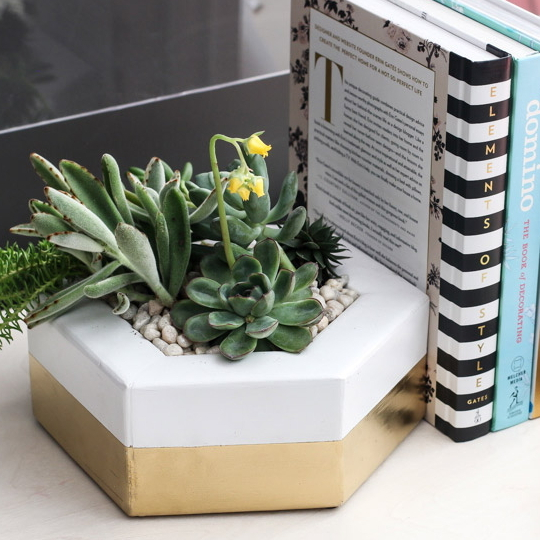 DIY Projects, White And Gold Pot With Succulents On Bookshelf