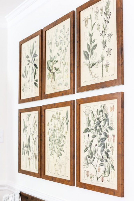 Large Wall Decor Botanical Plant Color Engineer Prints, Blesser House