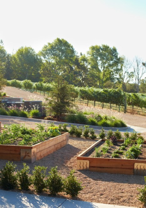Backyard View With Orchard And Wood Garden Boxes With Metal Corner Accents