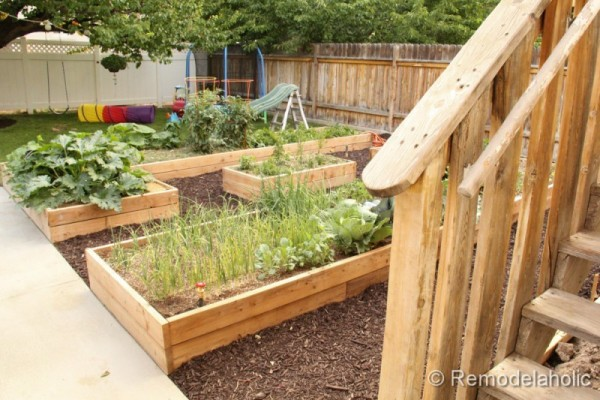 Backyard With Natural Wood Garden Boxes And Plants Growing In Each