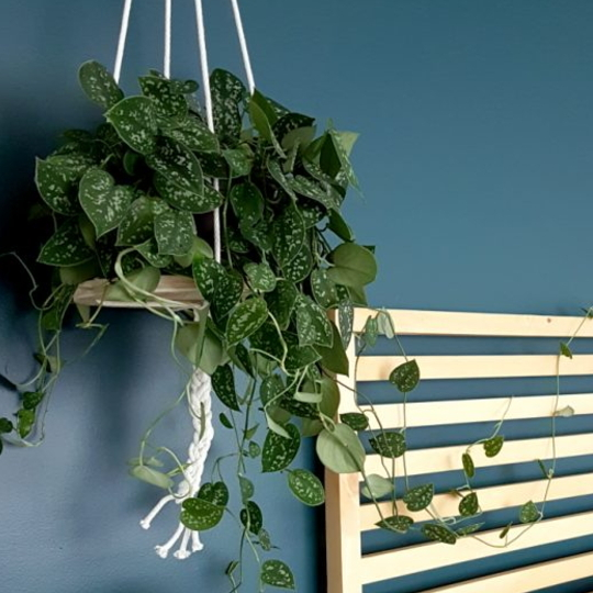 Easy And Beautiful DIY Hanging Planter