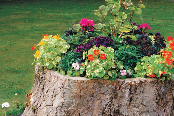 Creative Flower Bed Planter Idea, Tree Stump Flower Planter, This Old House
